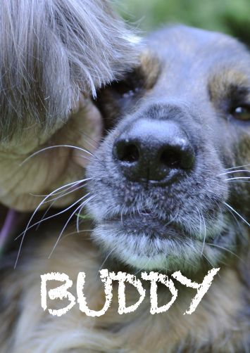 BUDDY - Explores the close bond between animal and human. Amoving portrait of guide dogs and their owners